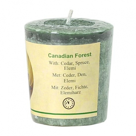 canadian forest.jpg